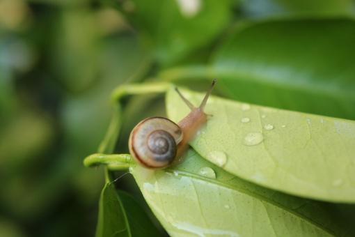 カタツムリの画像 p1_15